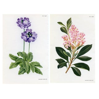 Vintage Curtis Botanical Prints - A Pair For Sale