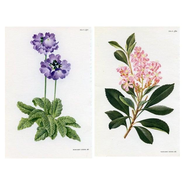 Vintage Curtis Botanical Prints - A Pair For Sale