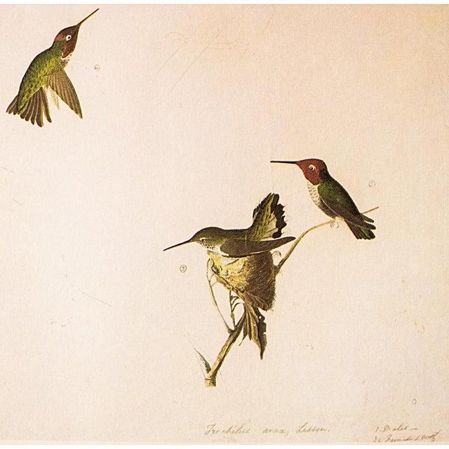 John James Audubon Anna's Hummingbird by John James Audubon, 1966 Vintage Print For Sale - Image 4 of 8