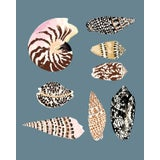 "Image of ""Fiji Shells in French Blue"" Contemporary Giclee Print by Sarah Gordon For Sale"