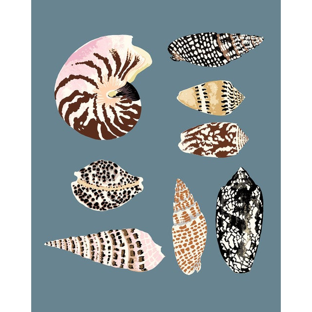 """""""Fiji Shells in French Blue"""" Contemporary Giclee Print by Sarah Gordon For Sale"""