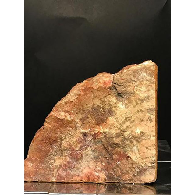 Mid 20th Century Petrified Wood Bookends - a Pair For Sale In Philadelphia - Image 6 of 8