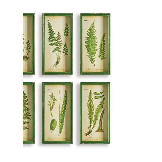 Contemporary Fern Study Shadow Box Prints - Set of 6 For Sale - Image 3 of 4