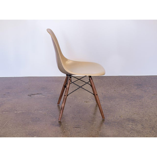 Contemporary Eames Fiberglass Greige Shell Chairs on Walnut Dowel Base For Sale - Image 3 of 7