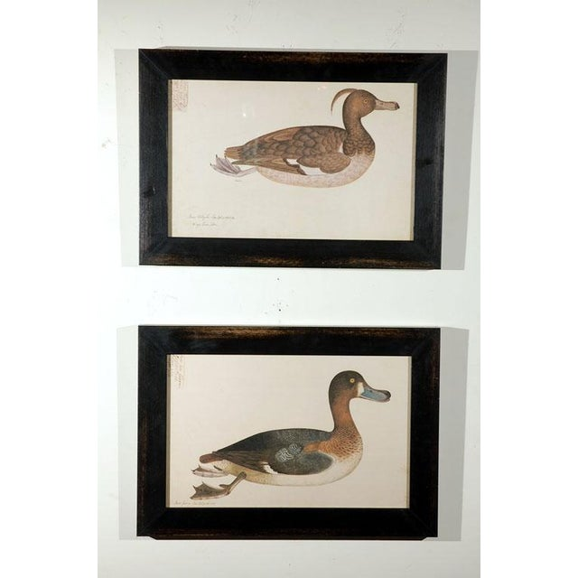 1940s Framed Duck Prints - Set of 5 For Sale In Los Angeles - Image 6 of 7