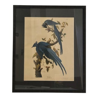1950s Audubon Bird Print For Sale