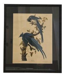 Image of Bird Prints
