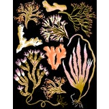Image of Seaweed Botanica Giclee Print by Sarah Gordon For Sale