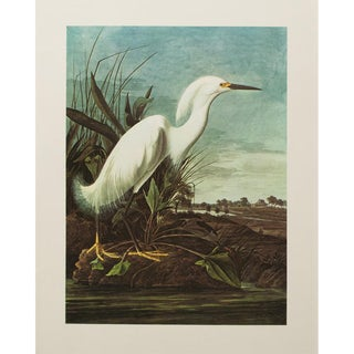 1960s Cottage Style Lithograph of a Great Snowy Heron by John James Audubon