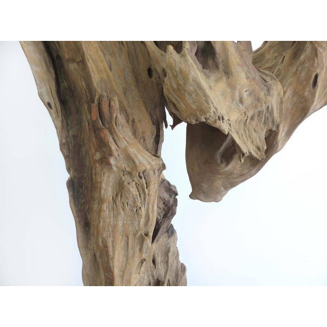"""""""Kangaroo"""" a Petrified Wood Sculpture from the Amazon by Artist Valeria Totti For Sale - Image 9 of 11"""