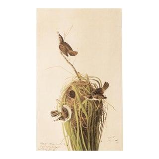 Marsh Wren by John J. Audubon, Vintage Cottage Print For Sale