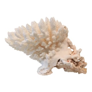 Natural White Coral Fragment For Sale