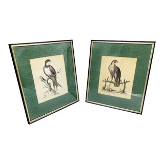 """Antiquely Hand Colored Copper Plate Engraved Art by George Edwards """"A Natural History of Uncommon Birds"""" Publication - a Pair For Sale"""