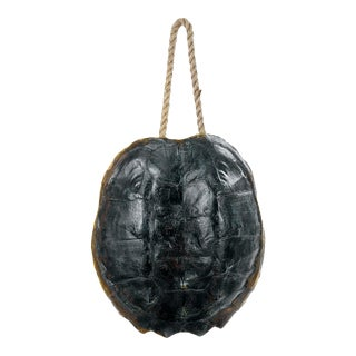 Turtle Shell Accessory in Natural For Sale