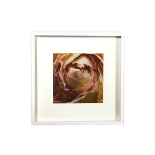 Framed Shadow Box Dried Pale Pink Rose Photography For Sale