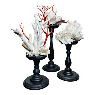 Baroque Style Natural Shell & Faux Coral Arrangements - Set of 3 For Sale