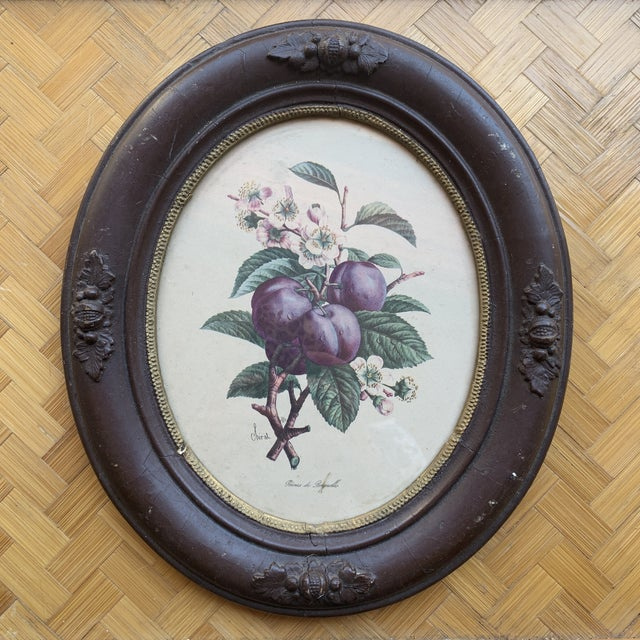 Unique pair of antique botanical prints in ornate wooden frame. Wonderful overall condition considering the age.
