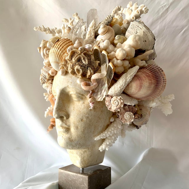 Large Shell Hygiea Bust For Sale - Image 11 of 12