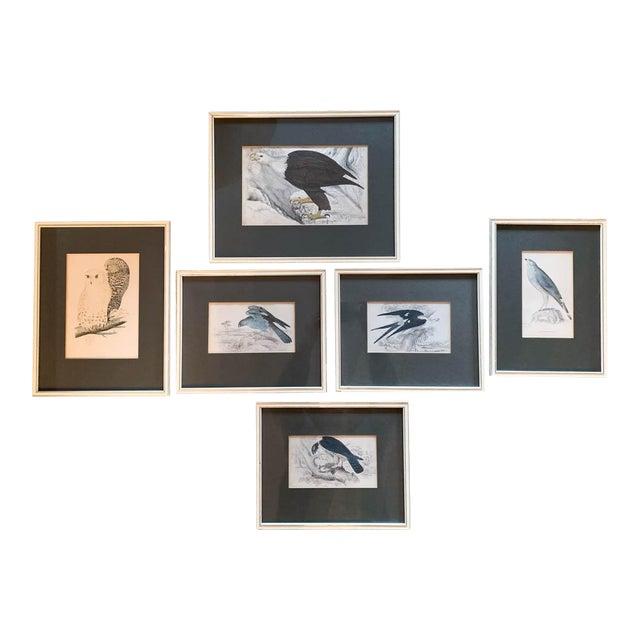 Set of 6 1840's Bird Engravings - Framed For Sale