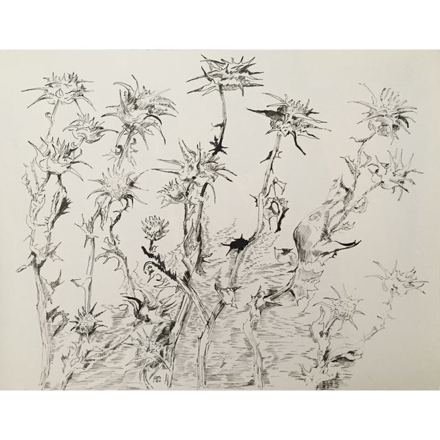 """""""Thistles"""", Pen & Ink by Roger Stokes - Image 2 of 4"""
