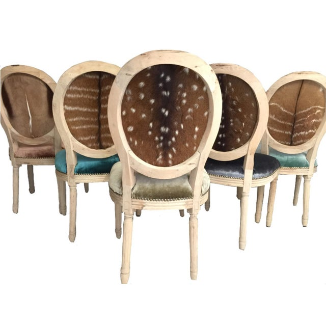 Country Silk Velvet & Animal Hide Chairs - Set of 6 For Sale - Image 3 of 6