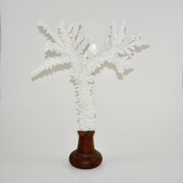 2000 - 2009 White Coral Branches Mounted on Round Wood Bases - a Pair For Sale - Image 5 of 8