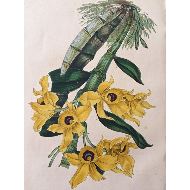Antique Orchid Flowers 19th Century Lithograph - Image 3 of 3