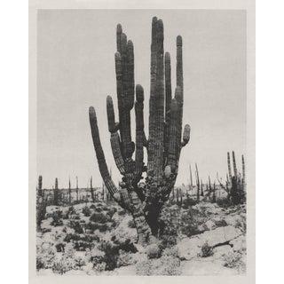 "Boho Southwest Saguaro Cactus - 24"" X 30"" For Sale"