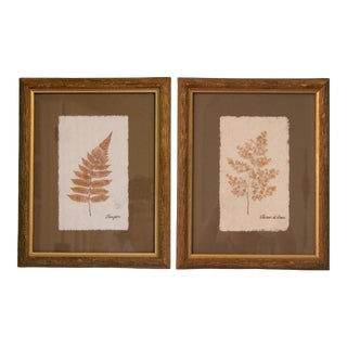 Mid Century French Botanical Pressed Framed Fern Plants For Sale