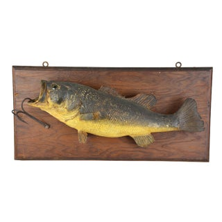 Vintage Fish Mount For Sale