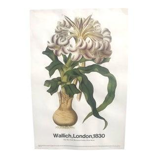 Original Vintage Wallich Botanical Lithograph For Sale