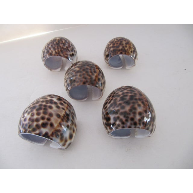 Set of five shell napkin rings. Great for any decor and party inside or out!