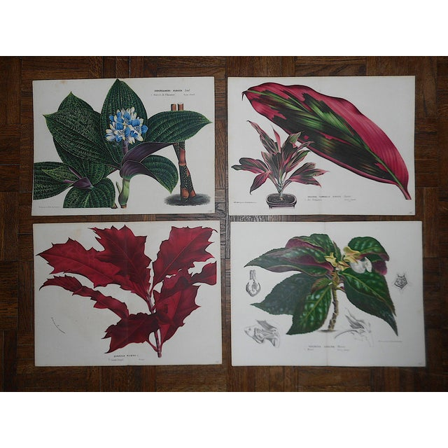 """Mid 19th Century Antique Botanical Lithographs-Flowers-Set of 4-Apprx. 10""""x13"""" For Sale - Image 5 of 5"""