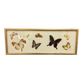 Vintage Gold Framed Butterfly Art For Sale