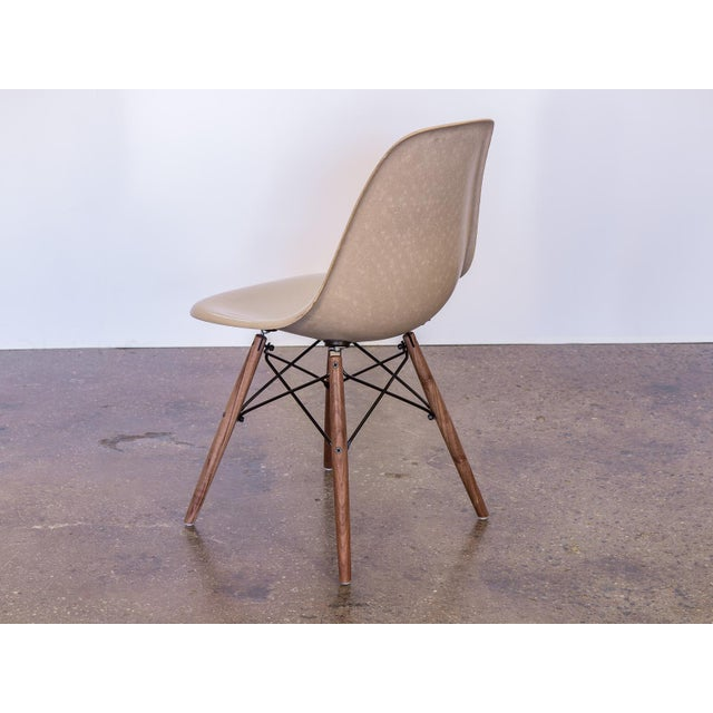 1960s Eames Fiberglass Greige Shell Chairs on Walnut Dowel Base For Sale - Image 5 of 7