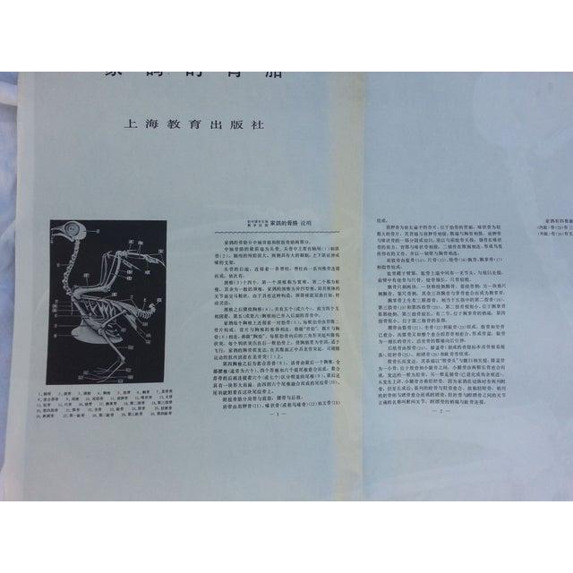 Vintage Anatomy Science Poster - Bird Skeleton - Image 5 of 5