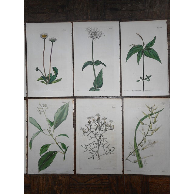 Realism Antique 19th Century Botanical Engravings-Period Hand Color-Set of 10 For Sale - Image 3 of 4
