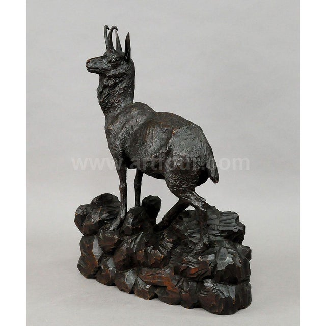 Black Forest Great Carved Wood Chamois Sculpture 1900 For Sale - Image 3 of 7