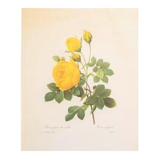"Pierre-Joseph Redouté Reproduction ""Yellow Roses"" Botanical Print For Sale"