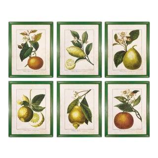Kenneth Ludwig Chicago Citrus Prints, Framed - Set of 6 For Sale