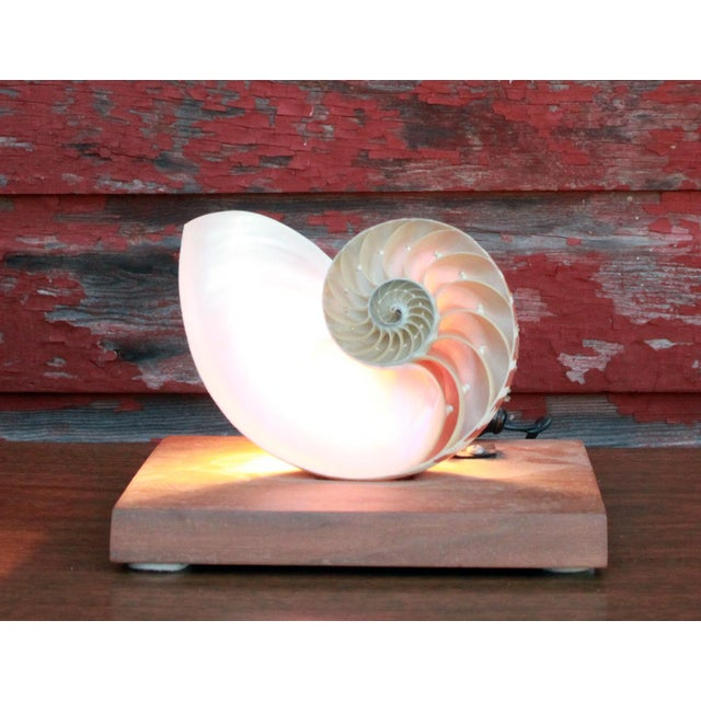 Stunning vintage c.1950's accent lamp / nightlight made from a genuine Nautilus shell! Its wonderfully made and has a...
