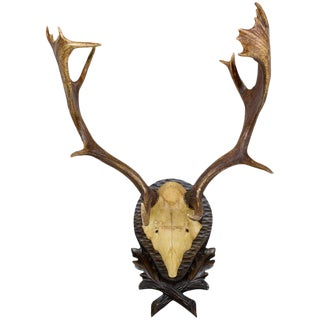 19th Century Habsburg Fallow Deer From Eckartsau Castle on Black Forest Plaque For Sale
