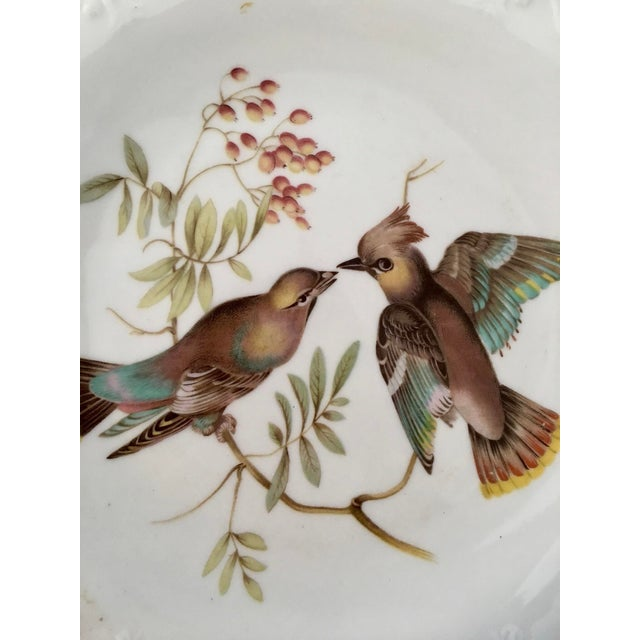 German Floral Bird Plates - a Pair For Sale - Image 4 of 8