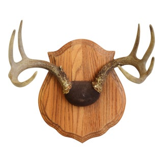 Vintage Mounted Trophy Antlers on Wood Plaque For Sale