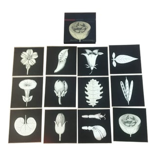 Botanical Prints - Set of 12 For Sale