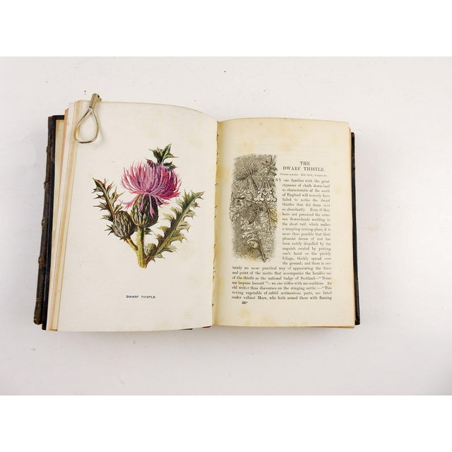 Leather Familiar Wild Flowers 1902 - 2 Volumes For Sale - Image 7 of 11