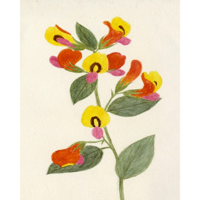Contemporary Hubbard Flower, Small: 1892 Artwork, Unframed Artwork For Sale - Image 3 of 3