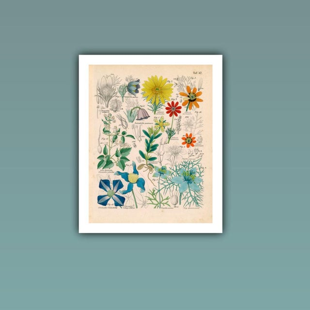 Realism Antique 'Botanical Plate' Archival Print For Sale - Image 3 of 4