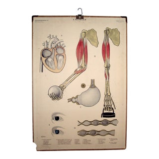 Vintage Swedish Mid-Century Medical Chart Poster For Sale