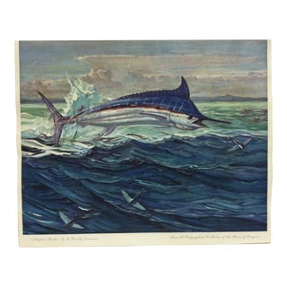 "1960s Vintage ""Striped Marlin"" W. Goadby Lawrence Color Print For Sale"